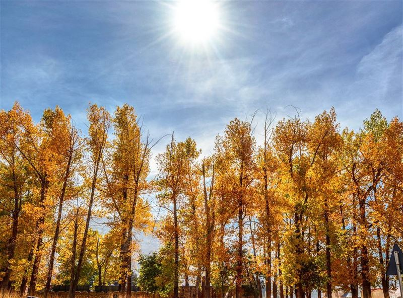 Good sunny Fall morning From Bcharre North Lebanon! !... (Bcharre El Arez بشري الأرز)