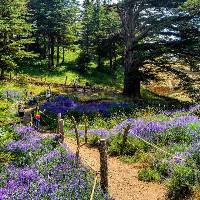Let's breathe some fresh air! And hike trough the Heaven of Cedars and... (Arz Bcharé)