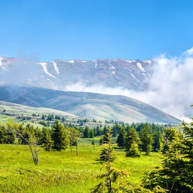 Summer, mountains, snow all at once.Heavenly Green fields, North Lebanon...