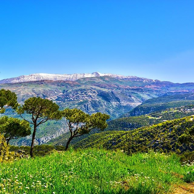 "The real spring is here and mount Sannine still covered with his ""eternal..."