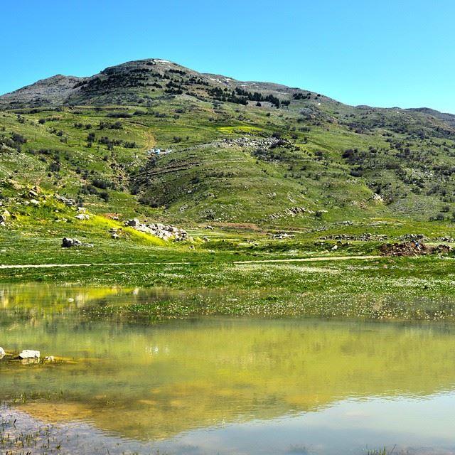 Nature's Symmetry. Spring days in Lebanon...