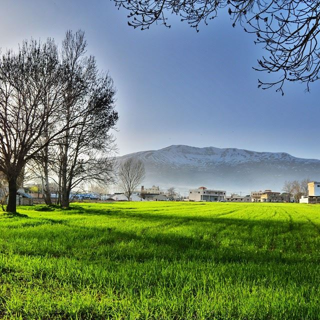 Good evening all with this lovely picture from Taanayel, Bekaa !Welcome...
