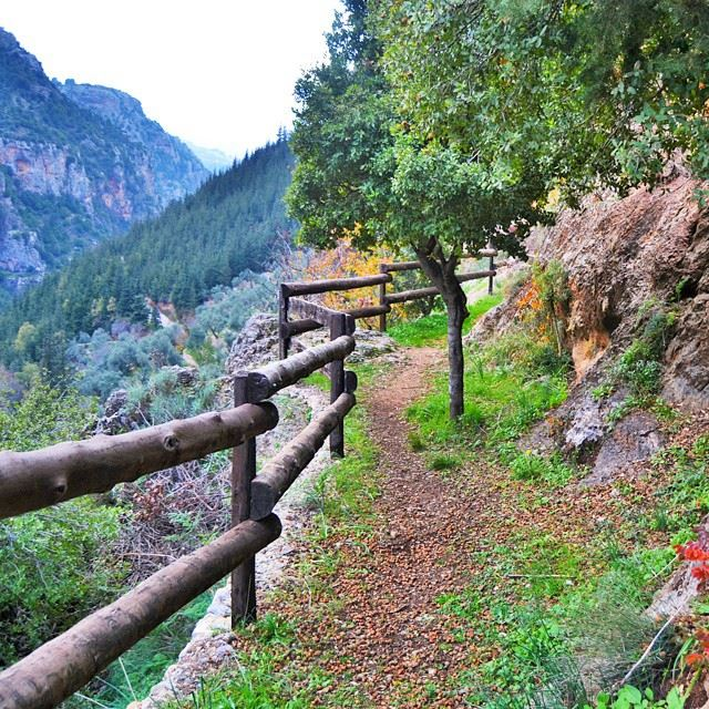 Way up to the monastery of kannubin ValleyLovely nature of Lebanon. . Is... (Quannoubin Valley)