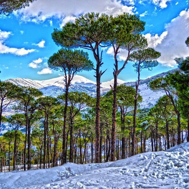 The Beauty of jezzine pine forest and snowLocation: Road to jezzin, South... (Jezzîne, Al Janub, Lebanon)