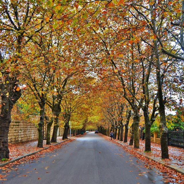 ♢And finally the fall is here...♢Sawfar, Lebanon.♢Camera : Nikon D3200♢h