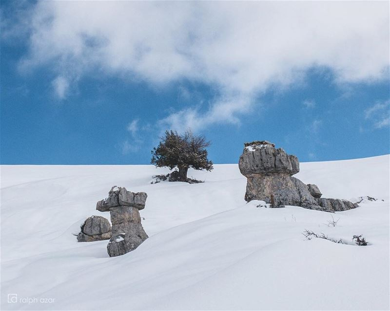 Middle tree🌲❄️ snow mountains ... (El Mejdel, Mont-Liban, Lebanon)