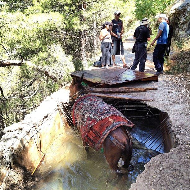 Un âne tombé dans le ruisseau sous la route. qadisha lebanon ...