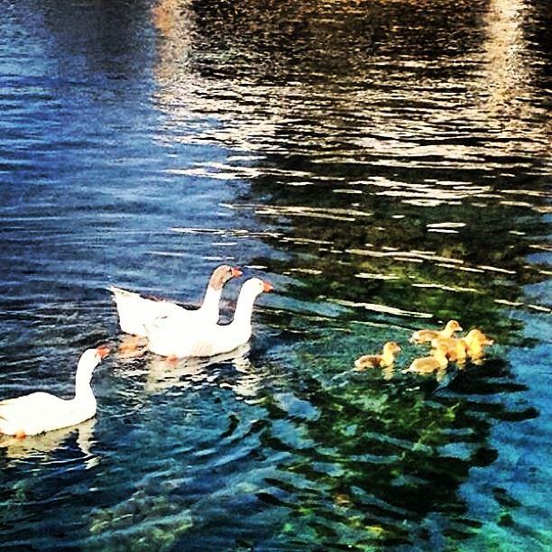 Happy Mother's Day ❤ happy mother day love nature lebanon baalbeck ...