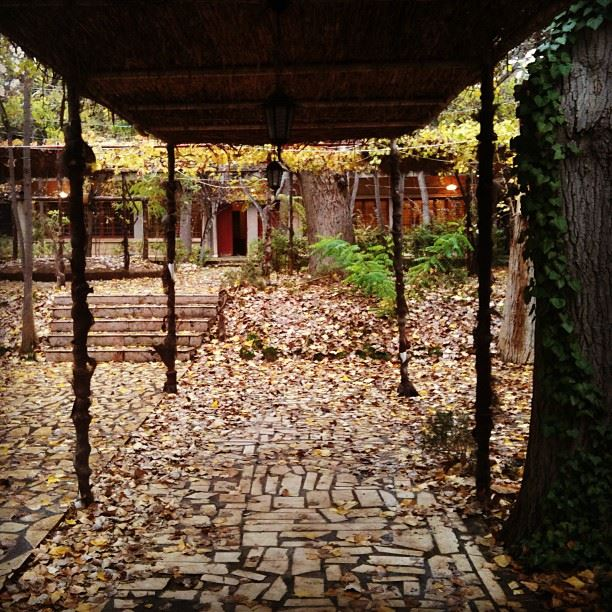baalback baalbeck lebanon nature autumn leaf photo instagram ...