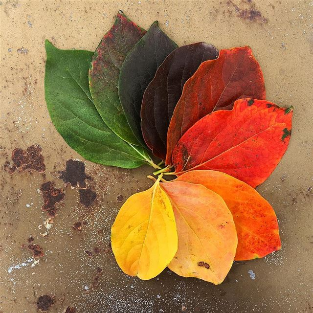 The Beauty of Change 🌈 nofilter leaf leaves tre autumn color ...
