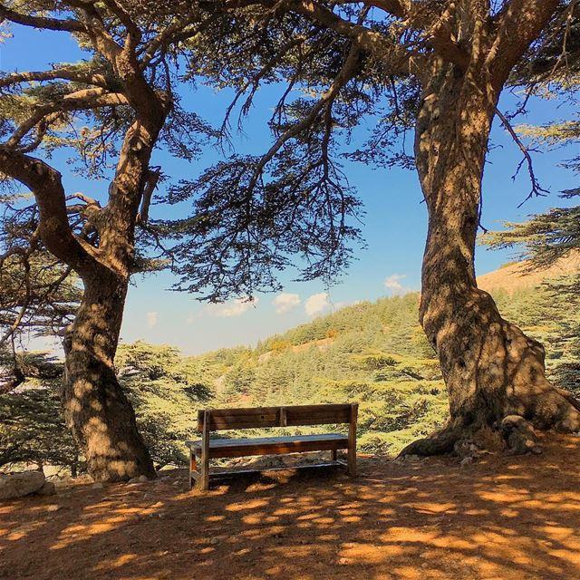 ...هون السما قريبة arzelmaaser chouf barouk cedars bench ... (Arz El Maasser)