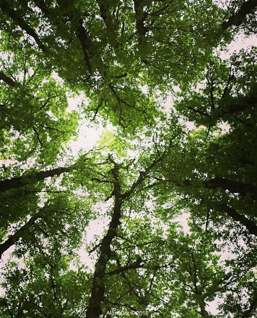 Look Up & Hope 🎈 livelovebeirut livelovelebanon ammou3a hiking ... (غابة العزر-القموعة)