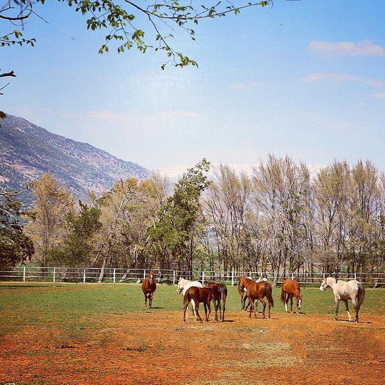 My Dream Farm 🌌 🐴 tb ammiq westbekaa bekaavalley farm dream ... (`Ammiq, Béqaa, Lebanon)