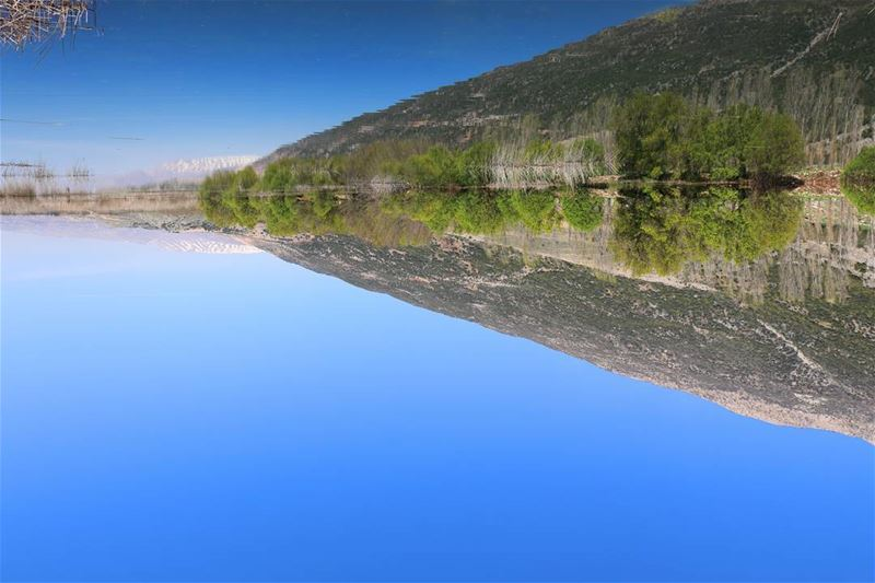 Turn your phone Upside down, to see the real photo.. ammiqreserve ... (`Ammiq, Béqaa, Lebanon)
