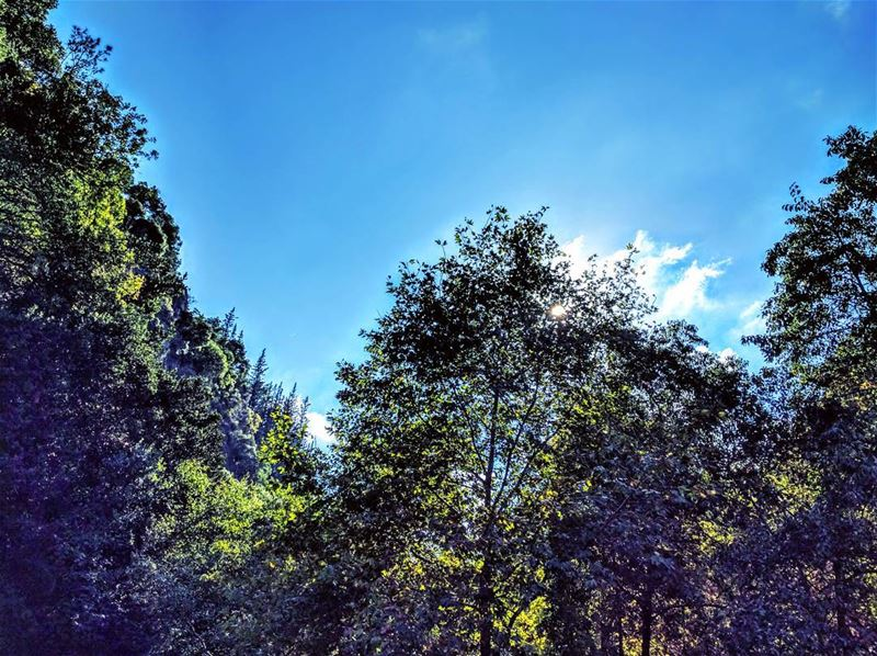 Clear Blue Sky 🌞 lebanon sky trees naturephotography nature ...