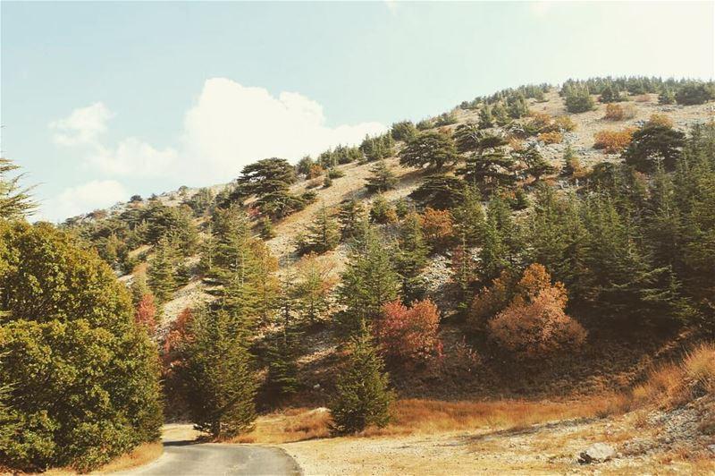 Sweet November 🍂🍃🍁 sweetnovember november shouf barouk cedarforest... (Barouk Cedar Forest)