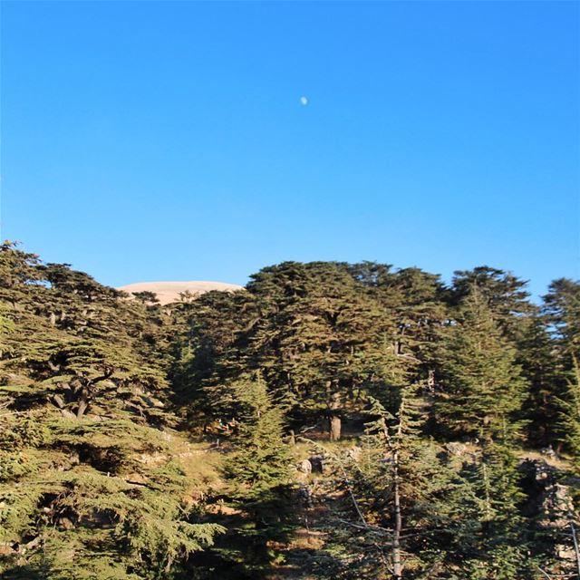 •Cedars• 🇱🇧 Philintravel LiveLoveLebanon HuntgramLebanon ... (Cedars of God)