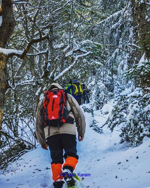 For the love of nature ehden cedars forest snowshoeing snow trees...