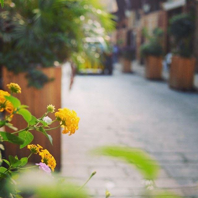 Byblos photography tagsforlikes ig_leb insta_lebanon insta ...