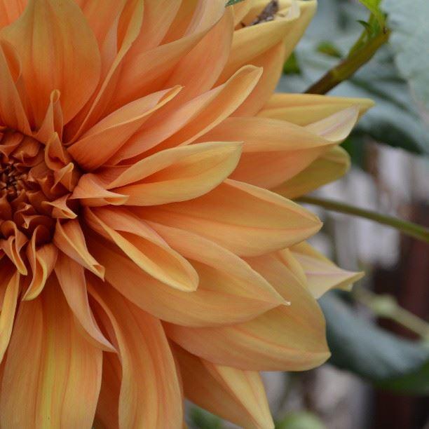 flowera in_love ig_lebanon insta_lebanese swag orange lebanon ...
