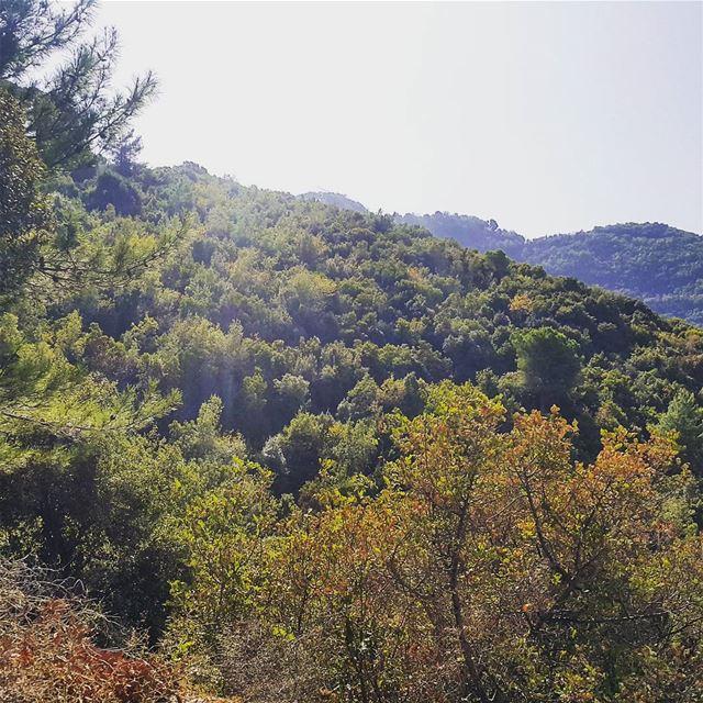 hikingadventures lebanonadventure landscape tree_magic tree_captures fall...