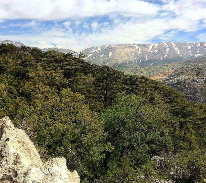 My beautiful country Lebanon 🌲 hikingadventure lebanonadventure mountain... (Tannourine)