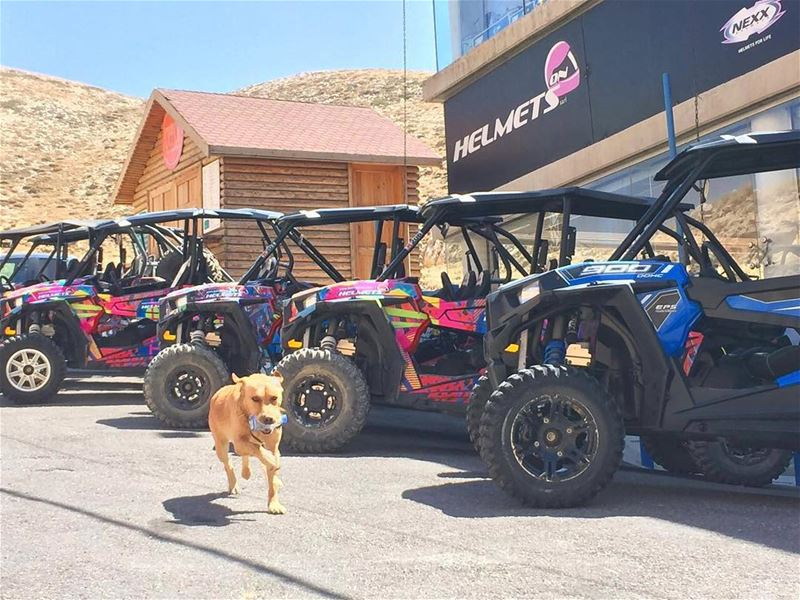 When you take your Dog to your Off-Road Trip! 🐶 happydogs dogs ...