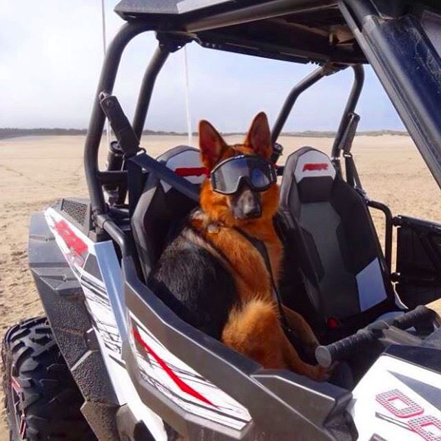 bestfriend happydog rzr offroad lebanon beirut laklouk kfardebian ...