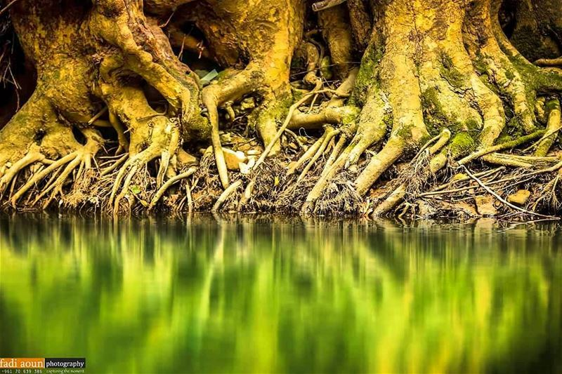 photo fadiaounphotography nature lebanon root tree photoshooting ...