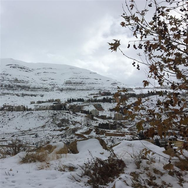 beautiful  nature_perfection  ptk_lebanon  whatsuplebanon  snow  winter ... (Faraya, Mont-Liban, Lebanon)