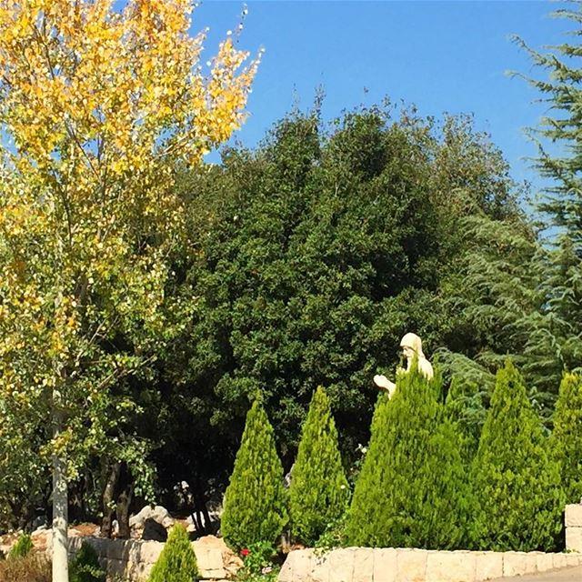 lebanon nature livelovelebanon trees bushes saintcharbel ig_lebanon... (Shayle)