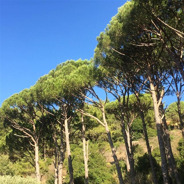 beautiful nature capture pinetrees mountains bluesky lebanon ... (Abey, Mont-Liban, Lebanon)