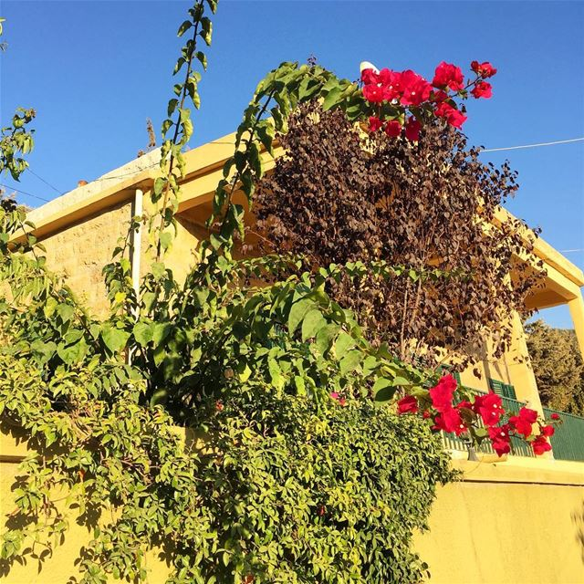 photooftheday photography igers beautifullebanon livelovelebanon ... (`Ain Ksur, Mont-Liban, Lebanon)