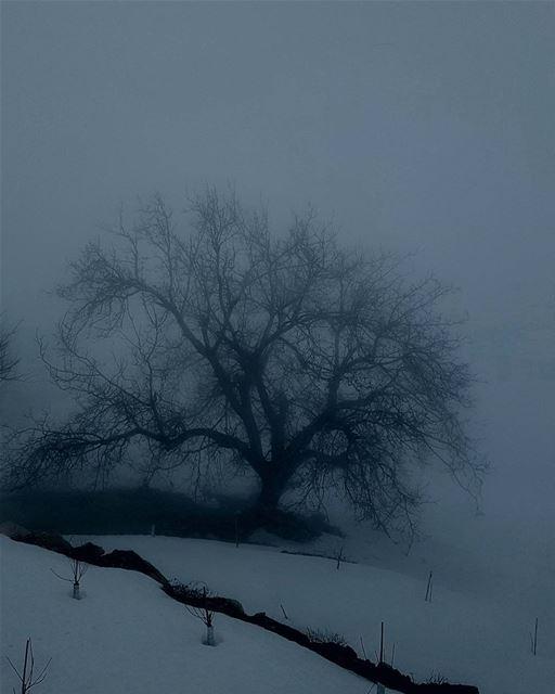 snow snowshoeing fog black white blackandwhite sannine mountain ...