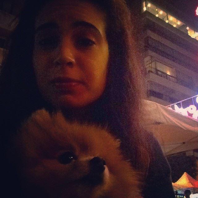 spikey competition dogs badaro lebanon christmas cutey lovehim ...