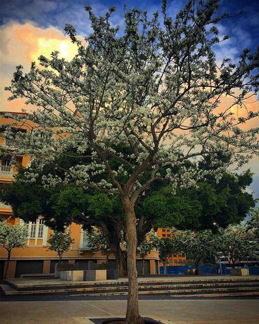 No matter how long the winter , spring is sure to follow 🌳🌸 ... (ساحة رياض الصلح)