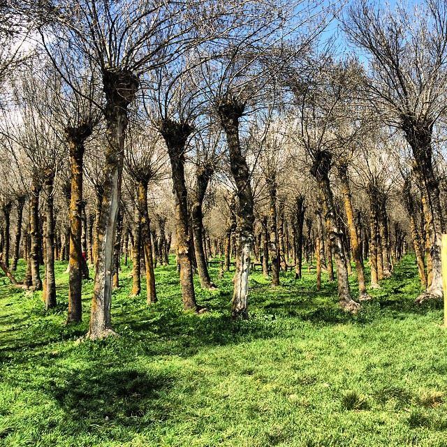 Divine nature ! 🌳🍃💚 taanayel bekaa lebanon green trees ... (Taanayel- Bekaa)