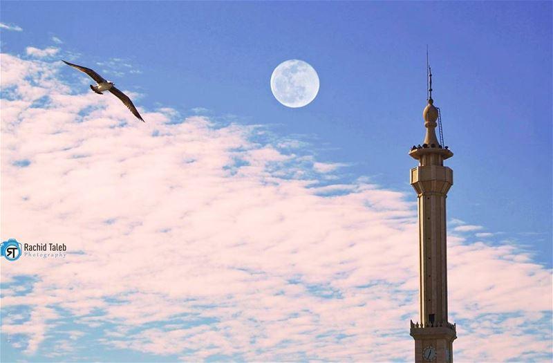 وكنتِ الوطن ! لا كأس له أكسره ، ولا مآذن من شاهقها أرفع نحو السماء تسابيح (الميناء طرابلس)