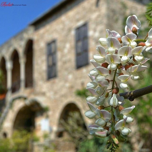 Lebanon biblos by_me Rachid 😊😊😊 قلت لزهرةِ :من أينَ لكِ كلّ هذه ال