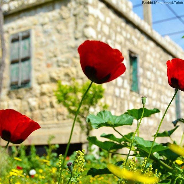 aldaniyeh north Lebanon rachid_mouhamd_photographer🌟🌟🌟🌟🌟🌟🌟🌟🌟 (بخعون الضنية)