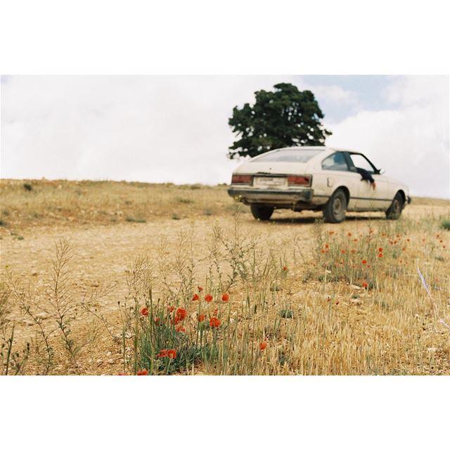 no regrets 🌸🤞🚙——— kodak 35mm roadtrippin mountains justgoshoot ... (Anti-Lebanon Mountains)