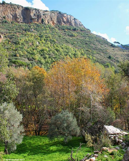 tb mountains besri green forest colorfull colors trees ... (Besri, Chouf)