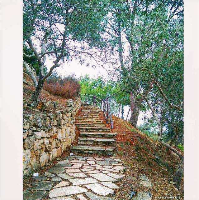 tb  nature  trees  maghdouche  southlebanon  stairs  lebanon  colorful ... (Maghdoûché, Liban-Sud, Lebanon)
