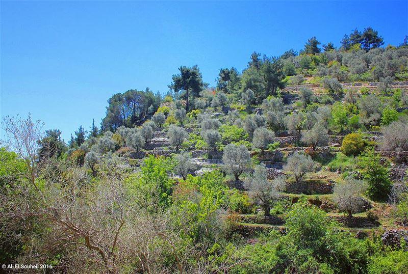 tb baaqline chouf nature sky trees colors olive fall ... (Baaqlîne, Mont-Liban, Lebanon)