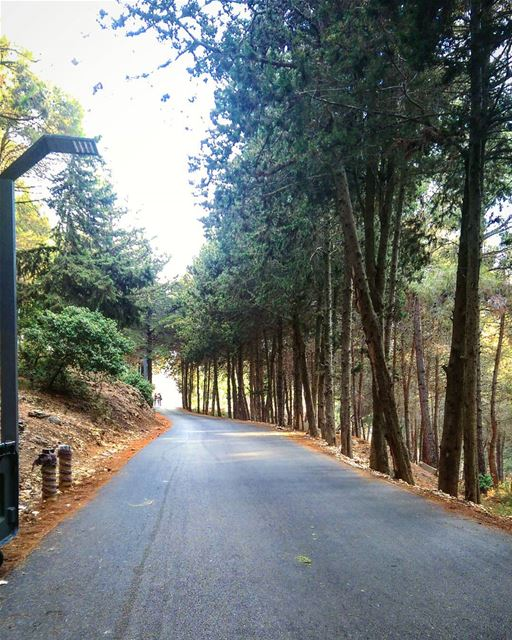 sunday view weekend awesome place tebnin trees forest ... (حرش تبنين)
