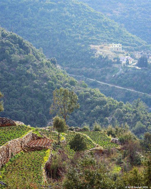 tb kfarhabou northlebanon mountains nature green trees lebanon ... (Kfar Habou)