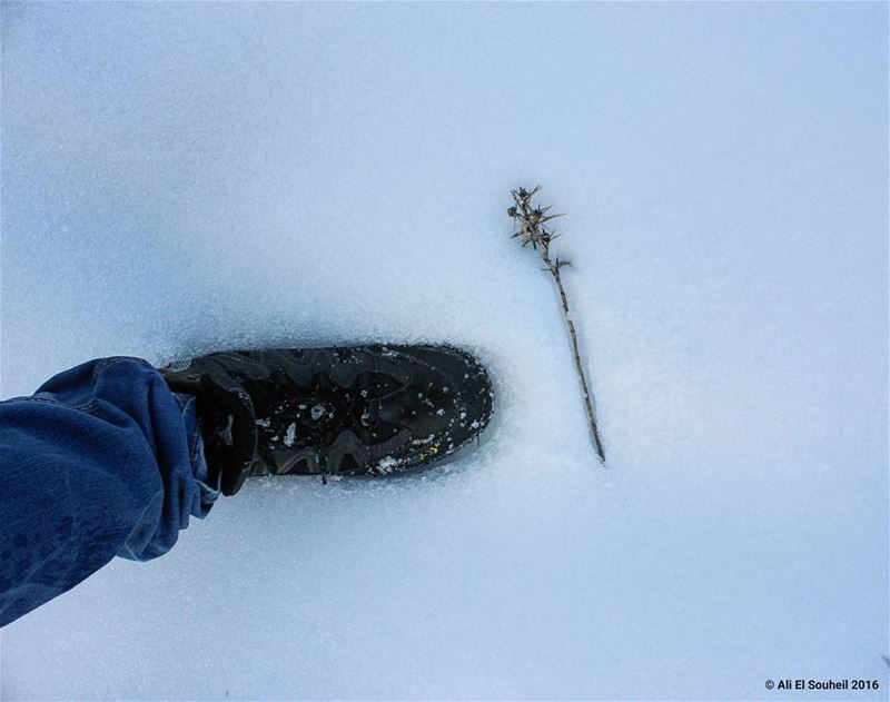 tb winter snow shoes cold freeze plant abstract photography ... (Hardîne, Liban-Nord, Lebanon)