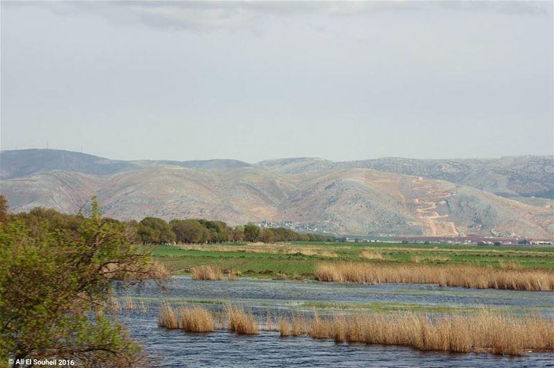 tb ammiq bekaa valley water swamp lake ... (`Ammiq, Béqaa, Lebanon)