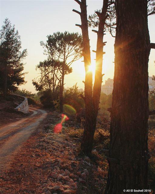 tb tree sunset sun ... (Jbaa- جباع)