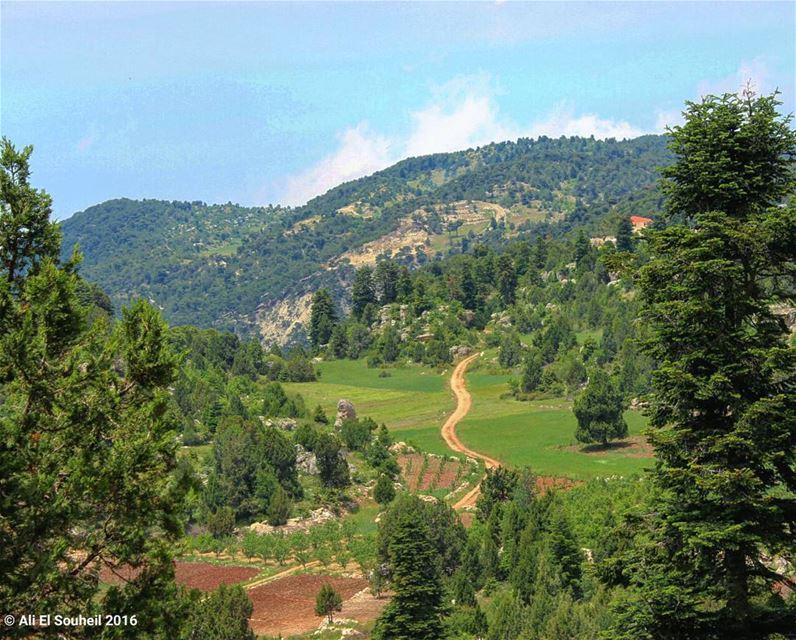 أجمل شي باقي بلبنان هو هالمكان (القموعة) ❤ ammo3a akkar forest valley ... (القموعة :))